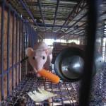Pregnant lady or lab rat?