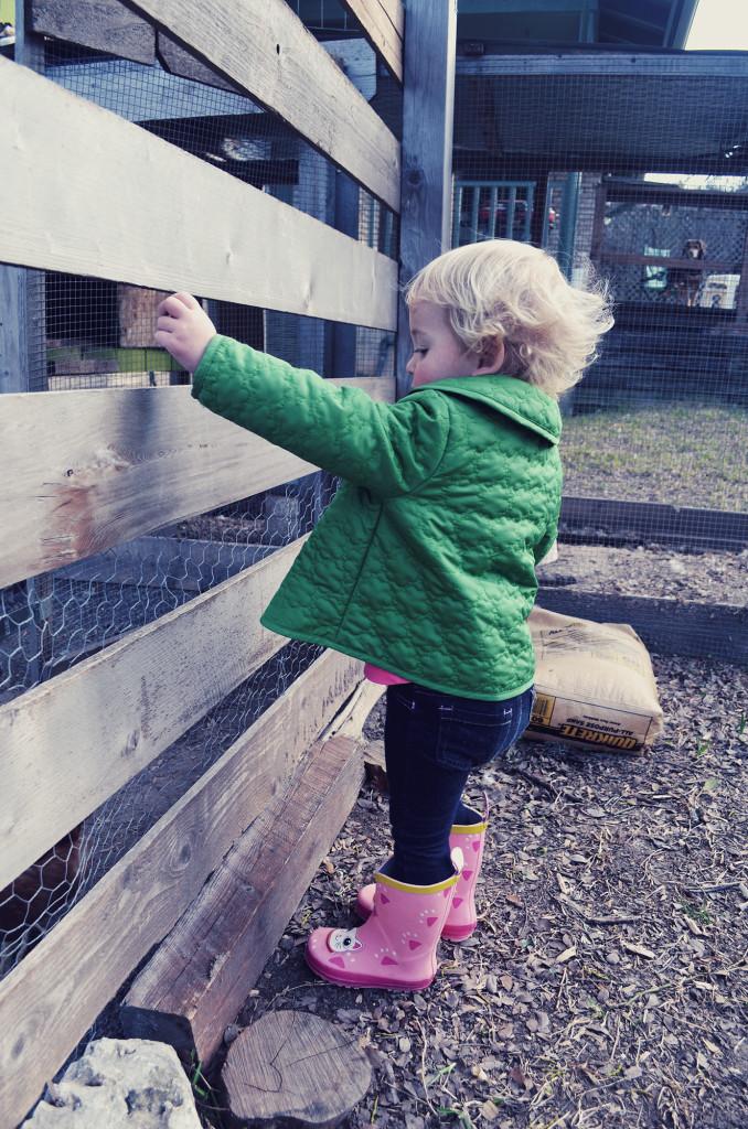 Isla feeding chickens kale from the garden