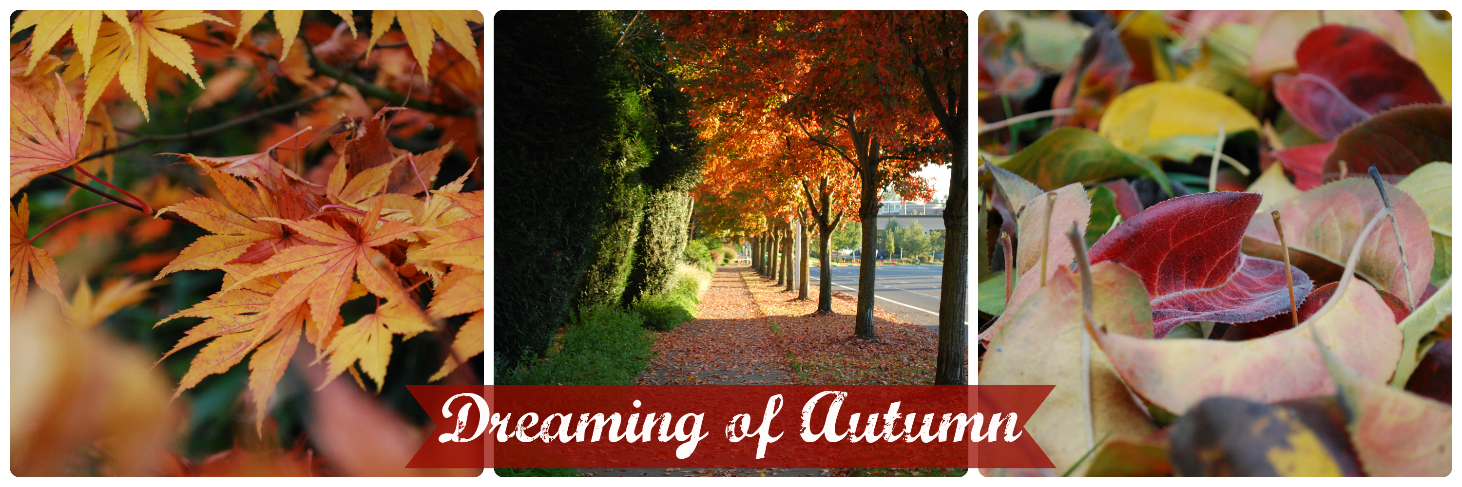 Dreaming of Autumn